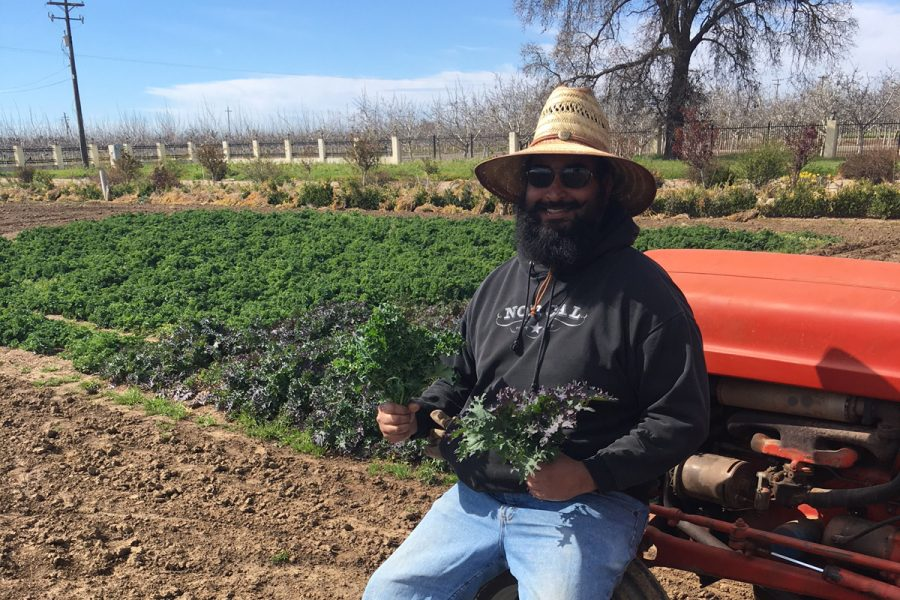 Alum sells organic kale, celery, spinach after converting home into farm